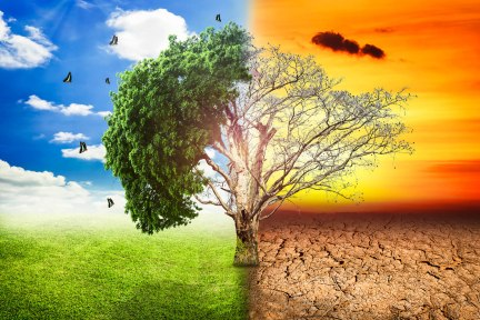 global-warming-climate-change-tree_1big_stock2