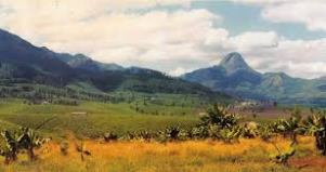 Mozambiquex.