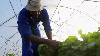 ls-a-day-in-the-life-of-a-vegetable-farmer-in-lesotho-780x439
