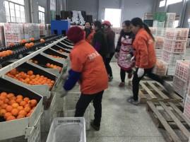 orange_fengjie_line