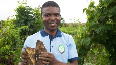 scaling-up-innovations-in-agriculture-lessons-from-africa-780x439