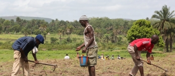 farmers_working_in_their_fields_in_guinea