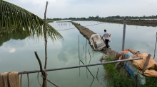Shrimp pond in Vietnam